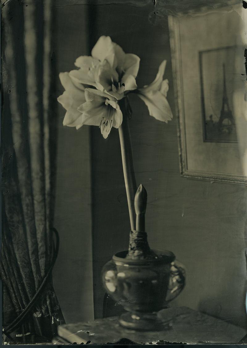 Herb Tintype 5 x 7